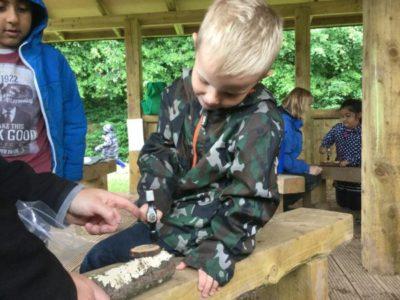Forest School – Reception 29 June 2017